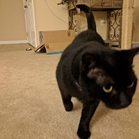 Adopt A Pet :: Nora the Sweet Little Lady - Oviedo, FL