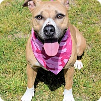 Adopt A Pet :: 1704-0074 Mary - Virginia Beach, VA