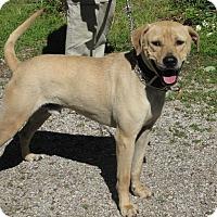 Adopt A Pet :: Brady - Oakland, AR