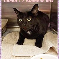 Adopt A Pet :: Cocoa - Brandon, FL