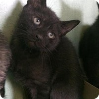 Adopt A Pet :: Noah - Philadelphia, PA