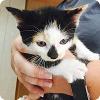 Adopt A Pet :: Raeka - Freeport, FL