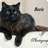 Adopt A Pet :: Boris - Oklahoma City, OK