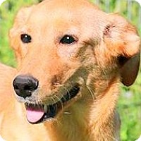 Adopt A Pet :: PENNY(WHAT A STORY--PLS READ! - Wakefield, RI