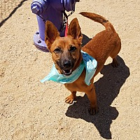 Adopt A Pet :: Peanut - California City, CA