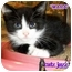 Photo 3 - Calico Kitten for adoption in Cedar Creek, Texas - Mara