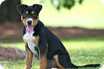 Terrier (Unknown Type, Medium) Mix Puppy for adoption in Wilmington, Delaware - Gertie