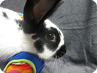 English Spot Mix for adoption in Newport, Delaware - Keir