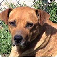 Terrier (Unknown Type, Medium) Mix Dog for adoption in Tyler, Texas - AA-Alisha