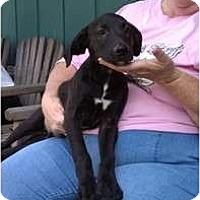 Adopt A Pet :: Dylan - Salem, NH