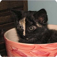 Adopt A Pet :: Shelly and Louise - Richfield, OH