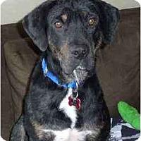 Adopt A Pet :: Nick - Seattle, WA