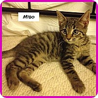 Adopt A Pet :: Miso - Miami, FL