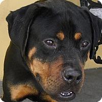Adopt A Pet :: Blaki - Pembroke Pines, FL