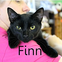 Adopt A Pet :: Finn - Wichita Falls, TX