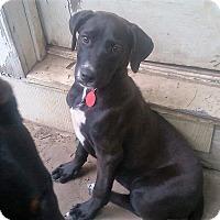 Adopt A Pet :: Livia - Adopted! - Croydon, NH