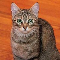 Adopt A Pet :: Abigail - Sykesville, MD