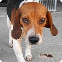 Adopt A Pet :: Hillbilly - Oskaloosa, IA