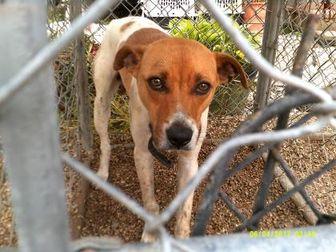 Shepherd (Unknown Type) Mix Dog for adoption in Opelousas, Louisiana - Kyle