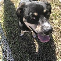 Adopt A Pet :: #30 - Seguin, TX