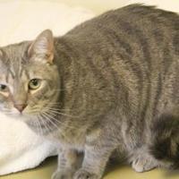 Adopt A Pet :: Tabs mama welch 6 - Thomasville, GA