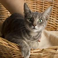 Adopt A Pet :: Tyke - Santa Paula, CA