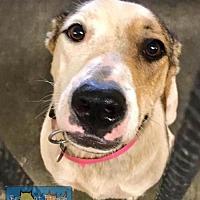 Adopt A Pet :: Georgia - Bowie, MD
