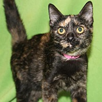 Adopt A Pet :: Fantasia - Hillsdale, IN