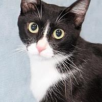 Adopt A Pet :: Lucky - Encinitas, CA