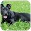 Photo 1 - Terrier (Unknown Type, Medium) Mix Puppy for adoption in Troy, Michigan - Maggie