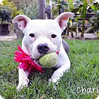 Adopt A Pet :: Charlotte - Auburn, CA