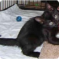 Adopt A Pet :: Basha - Dallas, TX