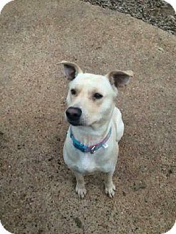 Labrador Retriever Mix Dog for adoption in West Hartford, Connecticut - Canton