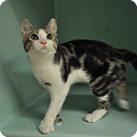 Adopt A Pet :: Richard - Rockaway, NJ