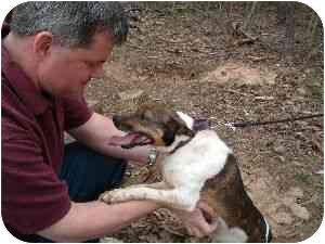 Rat Terrier Mix Dog for adoption in Gloucester, Virginia - Veronica