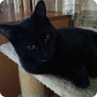 Adopt A Pet :: Blaze (Bryant) - McHenry, IL