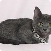 Adopt A Pet :: Latte - Kerrville, TX