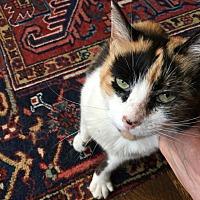 Adopt A Pet :: Roxanne - North Plainfield, NJ