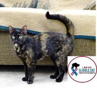 Adopt A Pet :: Kanga - Belleville, MI