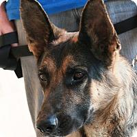 Adopt A Pet :: Champ - Palmdale, CA