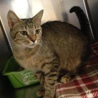 Adopt A Pet :: Ace Feral - Anderson, IN