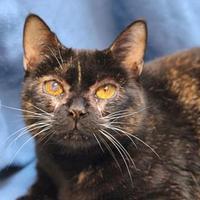 Adopt A Pet :: Rebecca - Mentor, OH