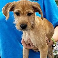 Adopt A Pet :: Georgia #5M - Osteen, FL