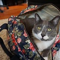 Adopt A Pet :: *Chester* - Philadelphia, PA