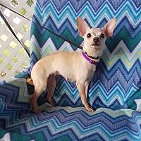 Adopt A Pet :: Sincere - Houston, TX