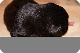 Catahoula Leopard Dog Mix Dog for adoption in Conway, Arkansas - Daisy aka Stella 2
