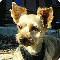 Adopt A Pet :: Gus - Spring Hill, FL