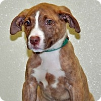 Adopt A Pet :: Penelope - Port Washington, NY