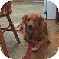 Adopt A Pet :: Marley - Yorktown, VA
