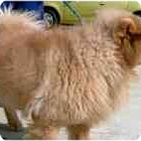 Adopt A Pet :: Sandy - Columbus, OH